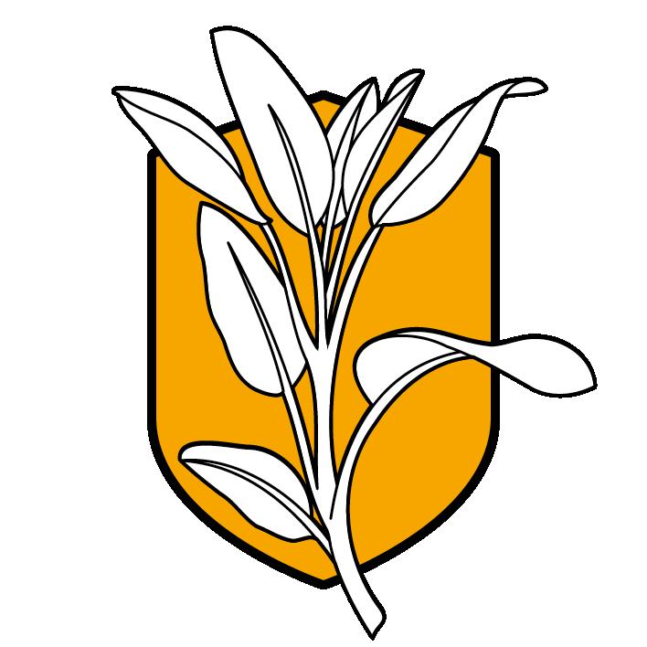 Salbei - die Superkraft aus dem Kräutergarten